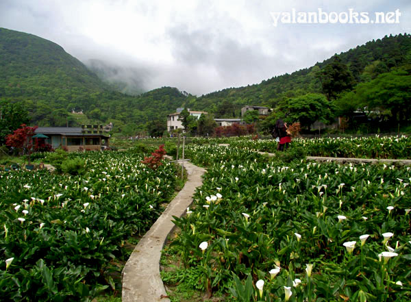 Flowers Taiei Yangming Mountain Romanticism  Photography 台北阳明山 花卉摄影 浪漫主义 Yalan雅岚 黑摄会